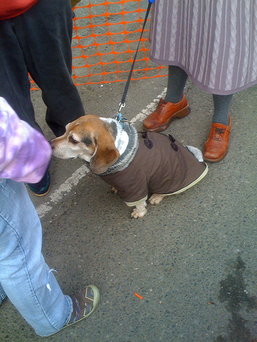Not sure how the dog liked the crowd, but at least he had a sweater.